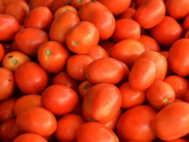 Tomato Price: Price of tomatoes plunges to Rs 2 per kg