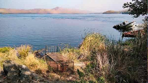 गांधीनगर-गोधरा सेंटर शिफ्ट किए जा रहे हैं मगरमच्छ